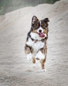 Hrana za psa naj bo kupljena v specializiranih trgovinah